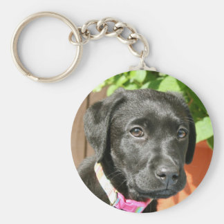 Black Labrador Key Chain