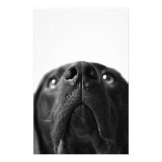 Black Labrador nose up close Stationery