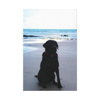 Black Labrador on a beach Canvas Print