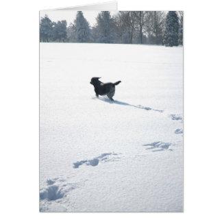 Black Labrador plays in the snow Cards