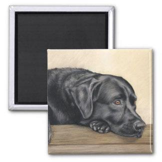 Black Labrador portrait Square Magnet