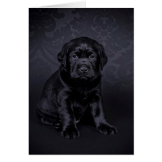 Black Labrador puppy Card