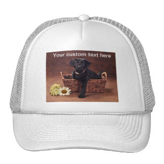 Black Labrador Puppy Dog Cap
