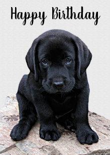 Happy Lab Puppy Cards