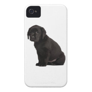 Black Labrador Puppy iPhone 4 Case-Mate Cases