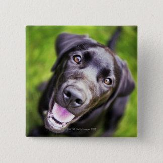 Black labrador puppy looking upwards, close-up 15 cm square badge