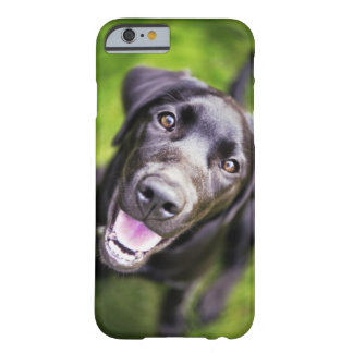 Black labrador puppy looking upwards, close-up barely there iPhone 6 case