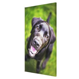 Black labrador puppy looking upwards, close-up canvas print