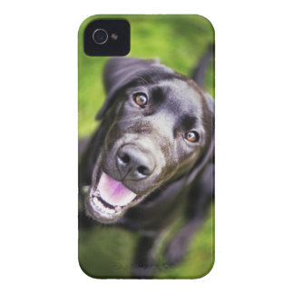 Black labrador puppy looking upwards, close-up iPhone 4 Case-Mate case