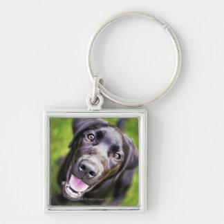 Black labrador puppy looking upwards, close-up key ring