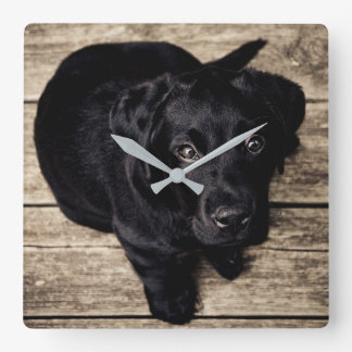 Black Labrador Puppy Square Wall Clock