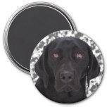 Black Labrador Retriever 7.5 Cm Round Magnet