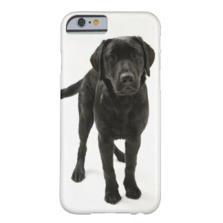 Black labrador retriever barely there iPhone 6 case