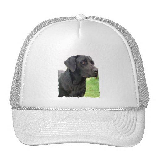 Black Labrador Retriever Baseball Hat