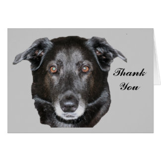 Black Labrador Retriever Dog Thank You Card