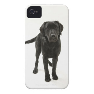 Black labrador retriever iPhone 4 Case-Mate case