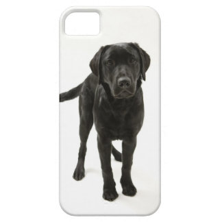 Black labrador retriever iPhone 5 cases