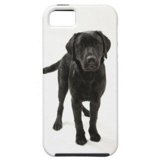 Black labrador retriever iPhone 5 cases