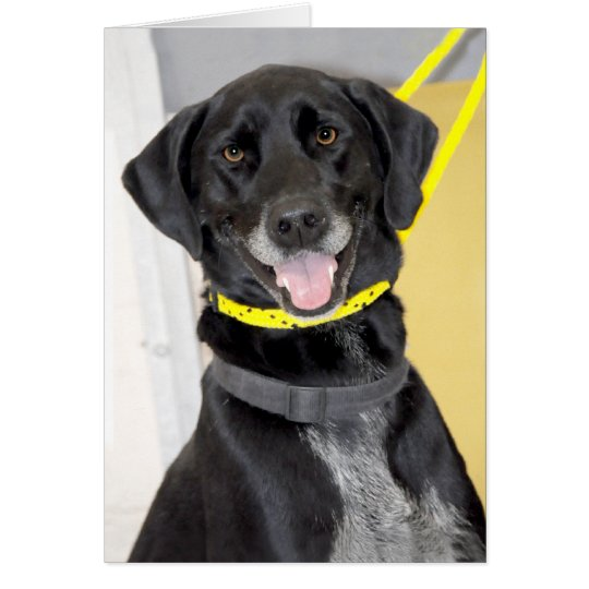 Black Labrador Retriever Mix Greeting/Note Cards