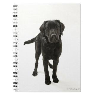 Black labrador retriever notebooks