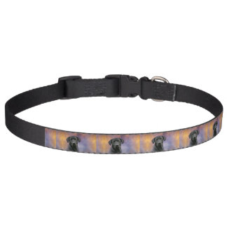 Black Labrador Retriever Pet Collar