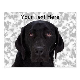 Black Labrador Retriever Postcard