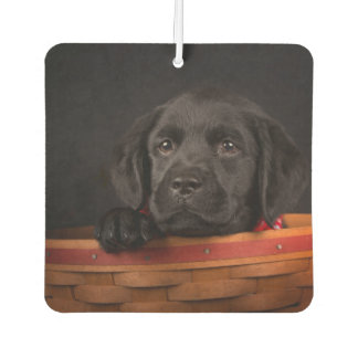Black labrador retriever puppy in a basket car air freshener