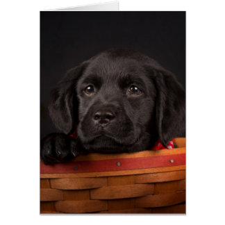Black labrador retriever puppy in a basket card