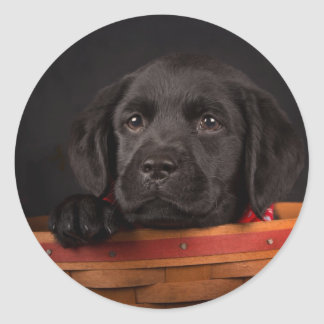 Black labrador retriever puppy in a basket classic round sticker