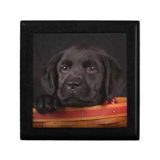 Black labrador retriever puppy in a basket gift box