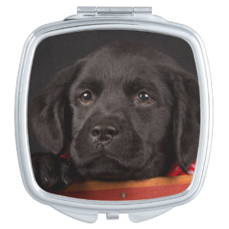 Black labrador retriever puppy in a basket makeup mirror