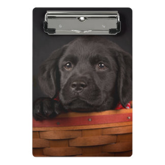 Black labrador retriever puppy in a basket mini clipboard