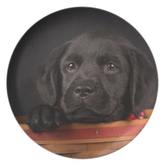 Black labrador retriever puppy in a basket plate