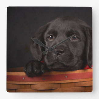 Black labrador retriever puppy in a basket square wall clock