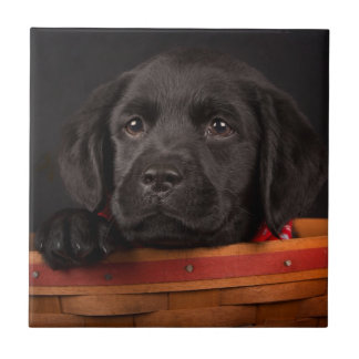 Black labrador retriever puppy in a basket tile