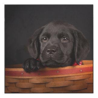 Black labrador retriever puppy in a basket