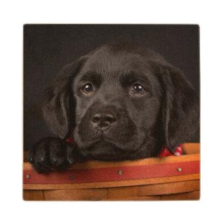 Black labrador retriever puppy in a basket wood coaster