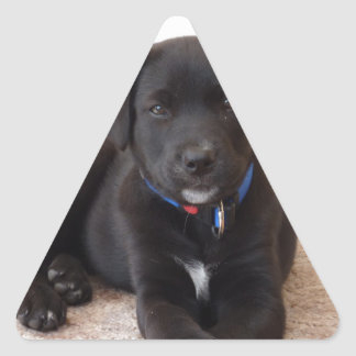 Black Labrador Retriever Puppy Sticker