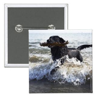 Black Labrador retriever running through surf, 15 Cm Square Badge