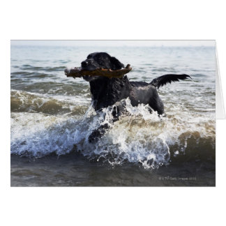 Black Labrador retriever running through surf Card