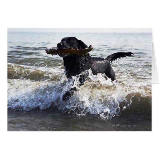 Black Labrador retriever running through surf Cards