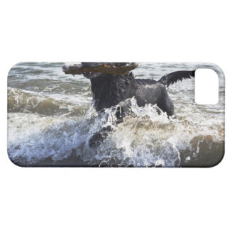 Black Labrador retriever running through surf, iPhone 5 Cases