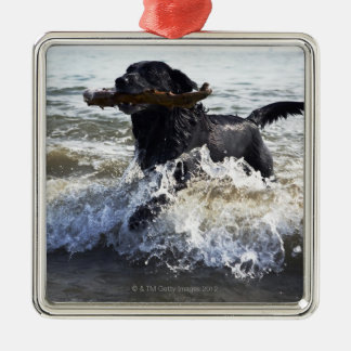 Black Labrador retriever running through surf, Christmas Ornament