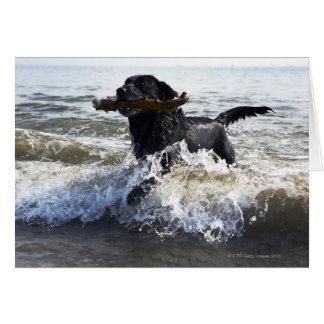 Black Labrador retriever running through surf Greeting Card