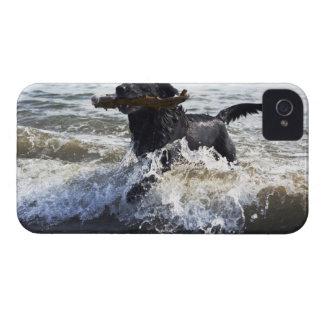 Black Labrador retriever running through surf, iPhone 4 Case-Mate Cases