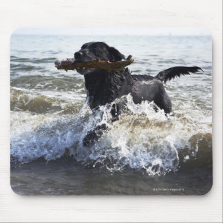 Black Labrador retriever running through surf, Mouse Pad