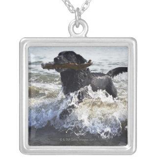 Black Labrador retriever running through surf, Silver Plated Necklace
