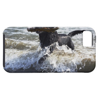 Black Labrador retriever running through surf, Tough iPhone 5 Case
