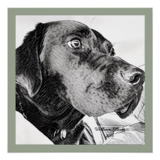 Black Labrador Retriever Sketch