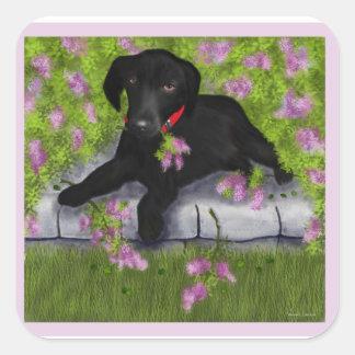 Black Labrador, Square Sticker